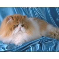 pedigree_cats_2d