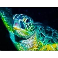 sea_turtle_screensaver